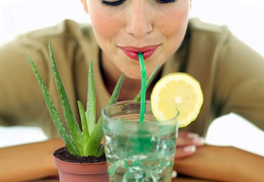 Drinking aloe to reduce plaque buildup