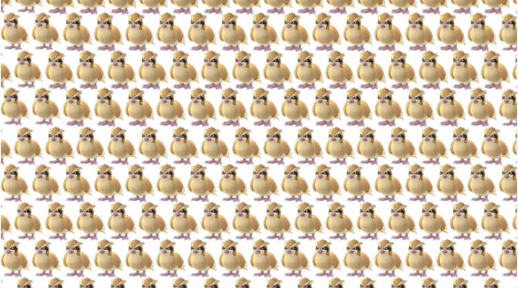 A large collection of Pidgeys